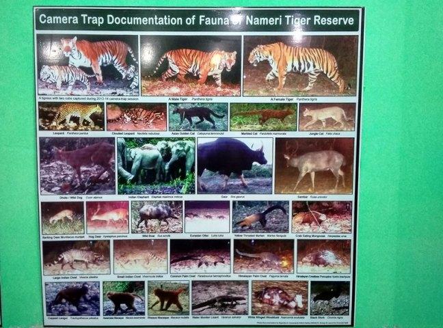 Kaziranga Photography Tour, Assam Birdwatching Tour, Kaziranga National Park