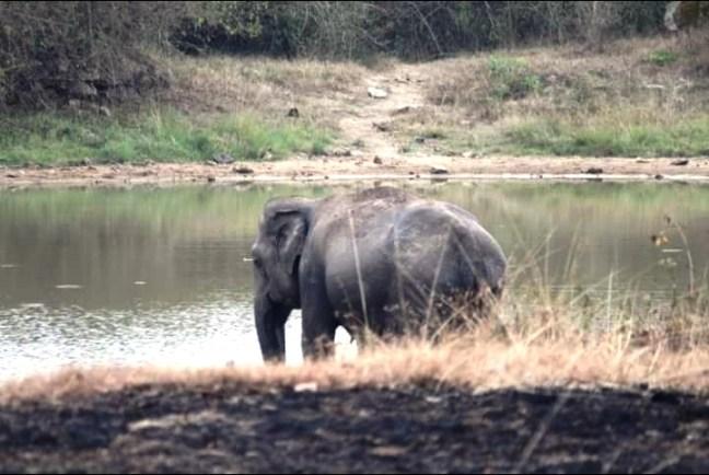 Bandipur National Park, Karnataka Tourism, Kaziranga, Bandipur Hotels, Bandipur Safari