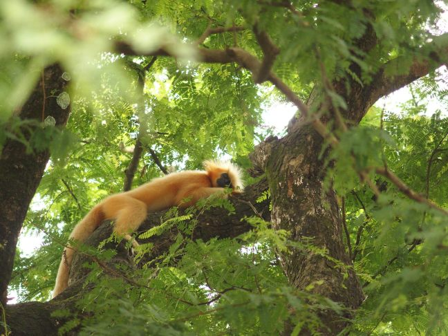 Raimona National Park, Manas National Park, Kaziranga Nationa Park, Assam