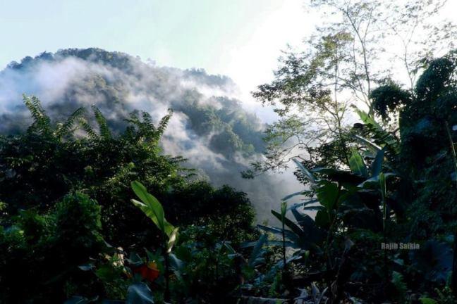 Dehing Patkai National Park, National Park, Kaziranga National Park, Assam