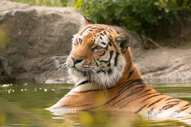 Ranthambore National Park, Ranthambore Hotels, Ranthambore Safari, Ranthambore Resorts, Kaziranga