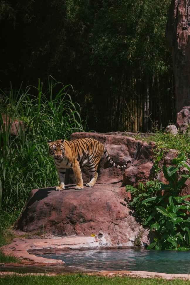 Bandhavgarh National Park, Bandhavgarh Hotels, Bandhavgarh Safari, Ranthambore Resorts, Kaziranga