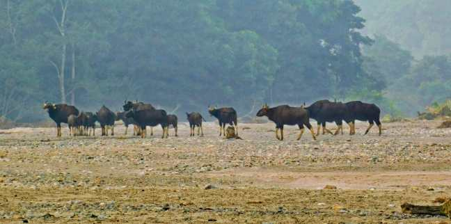 Buxa Tiger Reserve, Buxa National Park, Dooars, North Bengal Tourism