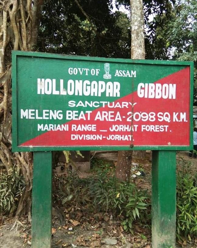 Gibbon Wildlife Sanctuary, Wildlife Sanctuary of Assam, Hollock Gibbons