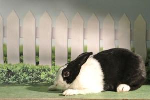 Sam the Bunny