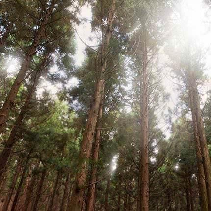 Innisfree-Forest-For-Men