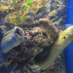 今日は質屋の日ということで、仙台うみの杜水族館のうつぼをドウゾー #s_uminomori #宮城ローカル http://t.co/zhrSFUZJiJ