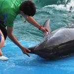 うみの杜、イルカにも目薬 #s_uminomori http://t.co/0W6Xl6XnHa
