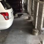 8階建てビルの上部3階分を駐車場として利用している所にいたネコ。弱ってないから、えさもらってるのか、地上に降りてご飯調達してるのか? http://t.co/U11cF1fwFu