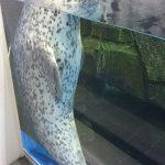仙台うみの杜水族館、ゴマフアザラシ #s_uminomori http://t.co/jrwRoCvM7l