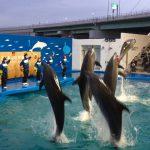 仙台うみの杜水族館のイルカショー #s_uminomori https://t.co/N2mnkDMg5E