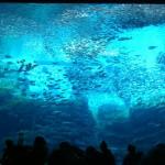 仙台うみの杜水族館、日中の撮影は難しい #s_uminomori https://t.co/jrj3zA98uo