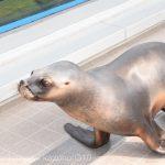 仙台うみの杜水族館、オタリアさんの目力強い #s_uminomori https://t.co/U2SkHyfc3U