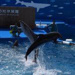 仙台うみの杜水族館、イルカショーが少し高度化。 #s_uminomori https://t.co/UNbOSzQvbl