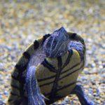 仙台うみの杜水族館、ミシシッピアカミミガメがあらわれた https://t.co/HJksChlWWE