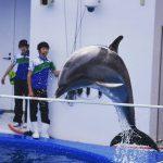 仙台うみの杜水族館、満席時には1000人が見入るイルカショー。