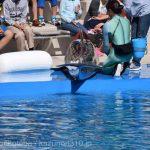 仙台うみの杜水族館、イルカショーの新人トレーナーイベント(座席前方に座ってる2名選ばれ、ショーに参加できる https://t.co/QxSakD2XvR
