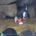 仙台うみの杜水族館、いたずらペンギンさん https://t.co/BiUU8H1Bc5