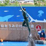 仙台うみの杜水族館、イルカショー、エアリフト。 #s_uminomori https://t.co/aidhcKWeUp