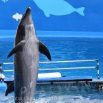 仙台うみの杜水族館、イルカショー、フロントウオーク。 https://t.co/4iJYfJnQfv