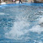 仙台うみの杜水族館、前3列に海水をかけるイルカショー、海水がかからない席でも楽しめる演出があるといいですね https://t.co/icwMWg5TLI