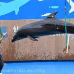 仙台うみの杜水族館、バンドウイルカのイルカショー https://t.co/jjQ35uLYjD