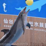 仙台うみの杜水族館、バンドウイルカのイルカショー #s_uminomori https://t.co/yKrP1HJHn7