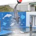 仙台うみの杜水族館、バンドウイルカのイルカショー https://t.co/fUupoVGe6c