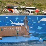 仙台うみの杜水族館、バンドウイルカのイルカショー https://t.co/yvrr18mLOi