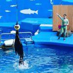 #仙台うみの杜水族館 #カリフォルニアアシカ #nikonD5300