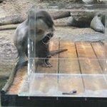 #ツメナシカワウソ #ごはんタイム #仙台うみの杜水族館 #iPhone7Plus