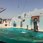 #バンドウイルカ #イルカショー #須磨海浜水族園