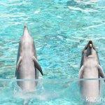 #バンドウイルカ #イルカショー #須磨海浜水族園 #nikonD5300