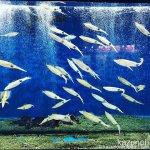 #アオリイカ #お寿司 #仙台うみの杜水族館 #iPhone7Plus