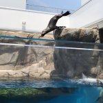 #オタリア #仙台うみの杜水族館 #iPhone7Plus #飛び込み