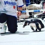 #サッカー #ペンギン #仙台うみの杜水族館 #nikonD5300