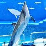 #バンドウイルカ #仙台うみの杜水族館 #nikonD5300