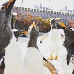#ペンギンパレード #仙台うみの杜水族館 #nikonD5300 上を向いて待とう