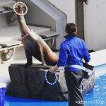 #カリフォルニアアシカ #仙台うみの杜水族館 #nikonD5300 輪投げ