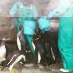 #ペンギン #ご飯 #仙台うみの杜水族館 #iPhone7Plus