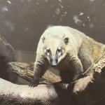 #アカハナグマ #仙台うみの杜水族館 #iPhone7Plus