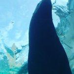 #トド #宮島水族館 #iPhone7Plus