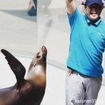 #アシカショー #宮島水族館 お笑いが入るのは関西の影響なのか