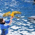 #ロコ #ルリコンゴウインコ #仙台うみの杜水族館 #nikonD5300