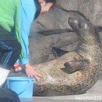 #ゴマフアザラシ #仙台うみの杜水族館 #nikonD5300 トレーニング
