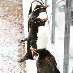 #ペンギン #仙台うみの杜水族館 #nikonD5300 より高く