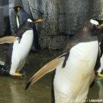 #ペンギン #仙台うみの杜水族館 #iPhone7Plus お久しぶりです