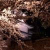 金沢城・兼六園桜のライトアップはまもなく!【ライトアップのスライドショー付き】