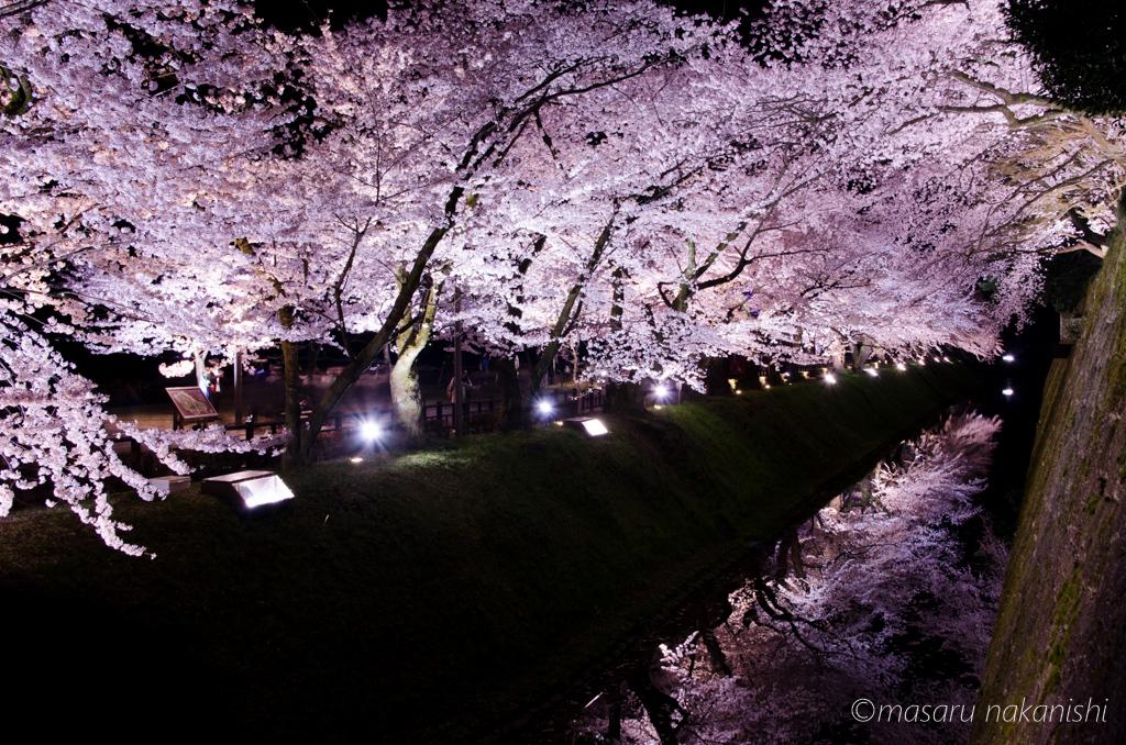 今年も撮りたい☆石川県のおすすめ桜撮影スポット6選