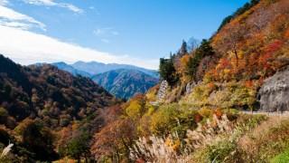 雨上がりの青空に紅葉ドライブin白山白川郷ホワイトロード☆10月17日現在の紅葉状況をお知らせします。